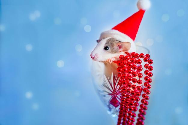 Feliz año nuevo símbolo del año nuevo 2020 - rata blanca o plateada de metal. linda rata en el interior del juguete con reflejo en el espejo