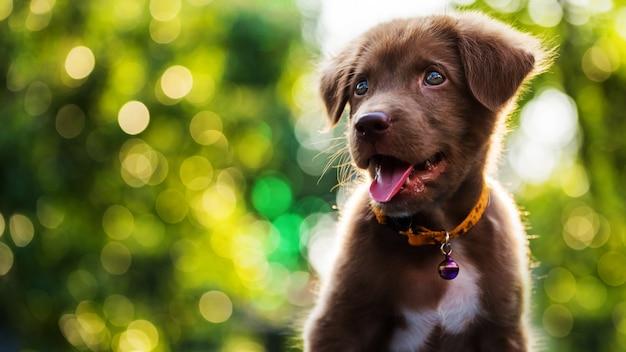 Feliz cachorro con fondo bokeh