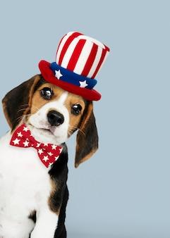 Feliz día del trabajo del lindo beagle con sombrero del tío sam