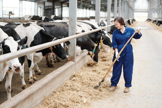 Feliz joven agricultor o trabajador de una granja lechera contemporánea trabajando con horca mientras está de pie junto a la fila de vacas en blanco y negro