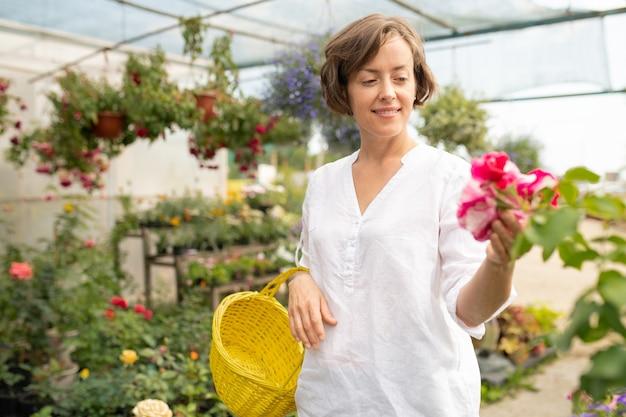 Feliz joven dueña de la tienda de flores con cesta de ingenio mirando un montón de petunia mientras elige las para vender