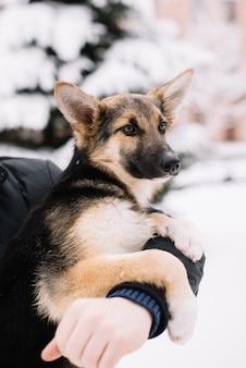 Feliz perro sentado en las manos de un hombre en invierno nieve