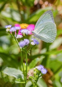 Feliz tiempo de mariposas en día soleado