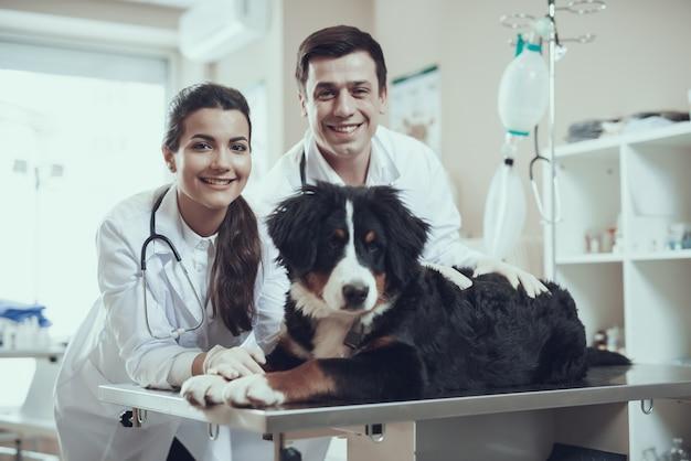 Feliz veterinario y perro bernés cuidado de la salud de mascotas.