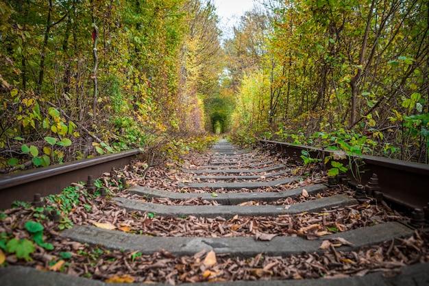 Un ferrocarril en el bosque otoñal túnel del amor