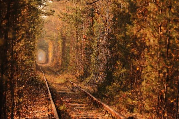 Un ferrocarril en bosque otoñal