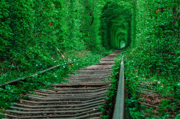 Un ferrocarril en el bosque de la primavera. túnel del amor, árboles verdes y el ferrocarril.