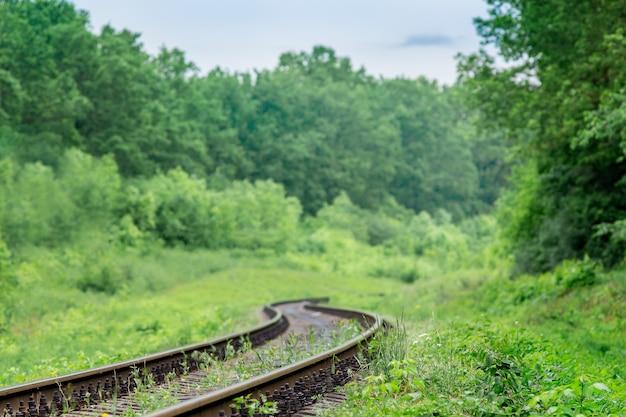 Ferrocarril pasando por el bosque