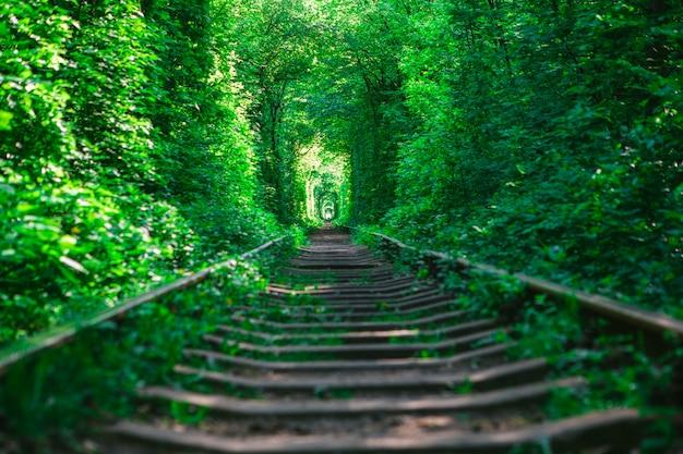 Un ferrocarril en el túnel del bosque primaveral del amor.