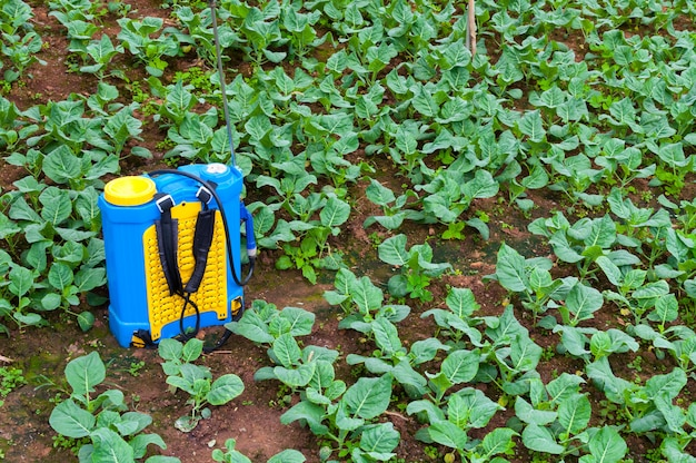 Fertilizante de pulverización. pulverizador bombeado a mano, uso de pesticidas en el jardín. pulverización de huertos