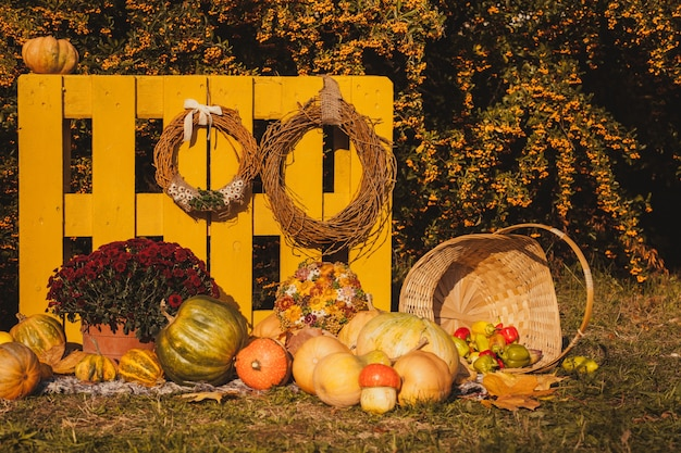 Festival de la cosecha de otoño: canasta con frutas de otoño, maleta vieja, calabazas y coloridas flores de otoño. diseño de paisaje en estilo campestre para la temporada de otoño.