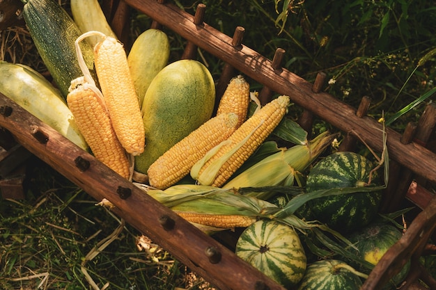 Fiesta de la cosecha con un pesebre de madera con regalos de los campos de maíz, sandía, calabacín