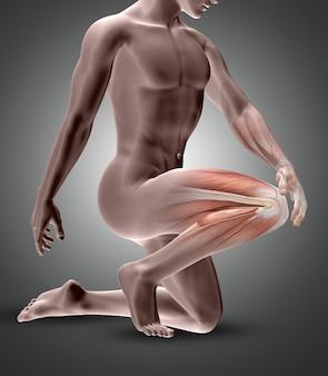 Figura masculina 3d con músculos de la rodilla resaltados.