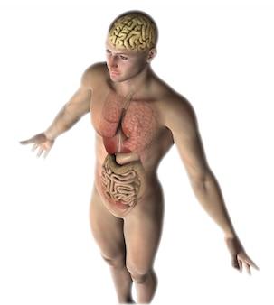 Figura masculina 3d con órganos internos y cerebro.