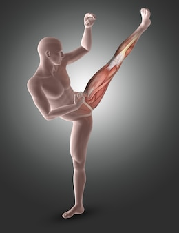 Figura masculina 3d en pose de kick boxing con músculos de las piernas resaltados