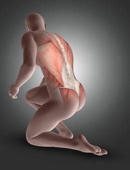 Figura masculina 3d de rodillas con los músculos de la espalda resaltados.