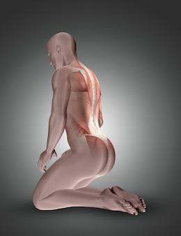 Figura masculina arrodillada en 3d con los músculos de la espalda resaltados.
