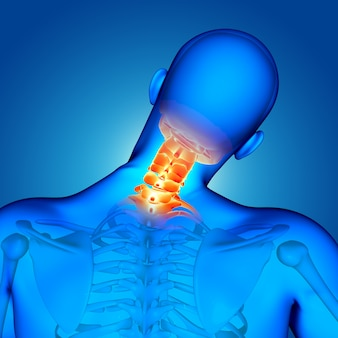 Figura masculina médica 3d con huesos del cuello resaltados.