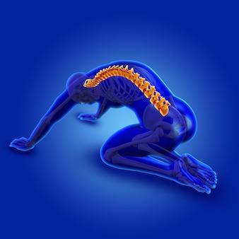 Figura masculina médica azul 3d con columna vertebral resaltada