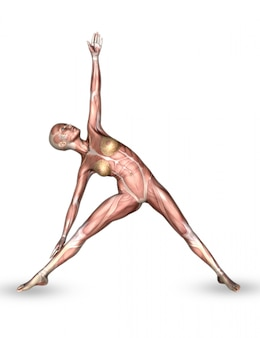 Figura médica femenina 3d con mapa muscular en pose de yoga