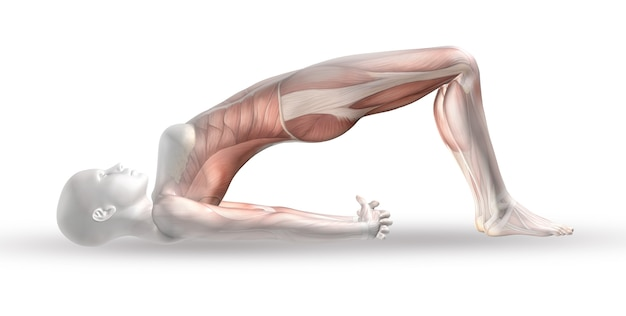 Figura médica femenina 3d con mapa muscular en posición de yoga
