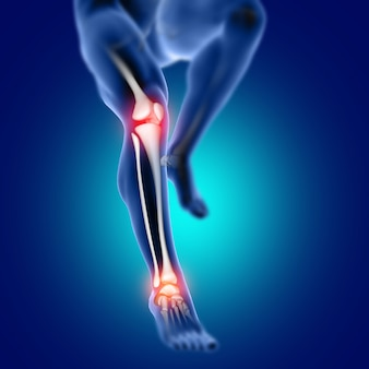 Figura médica masculina 3d con huesos de rodilla y tobillo resaltados