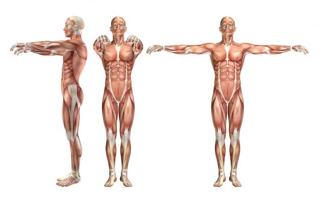 Figura médica masculina 3d que muestra abducción de hombro y abducción horizontal.