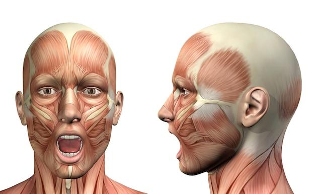 Figura médica masculina 3d que muestra una depresión mandibular frontal y una vista lateral