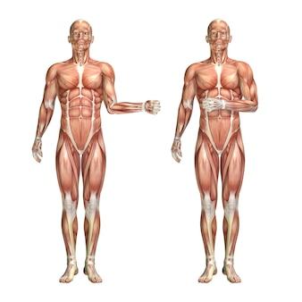 Figura médica masculina 3d que muestra la rotación externa e interna del hombro.