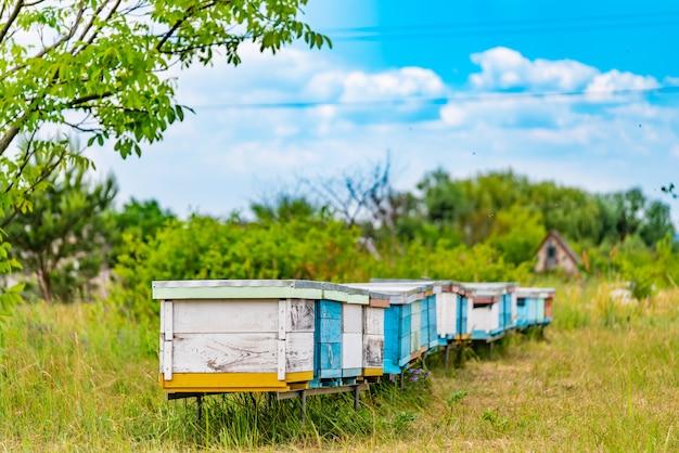 Fila de colmenas blancas y azules para abejas