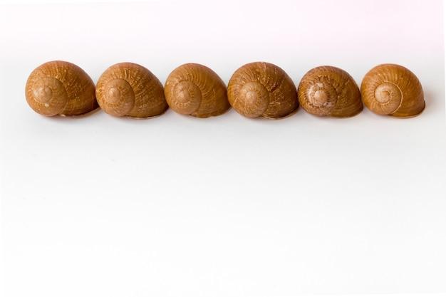 Fila de conchas de caracol vacías sobre un fondo blanco.