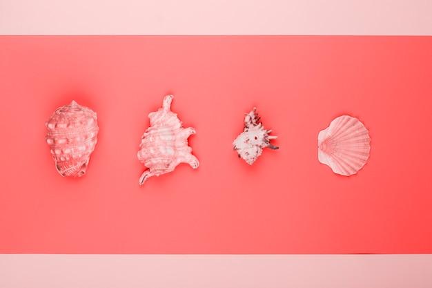Fila de conchas y conchas de peregrino sobre fondo coral y rosa