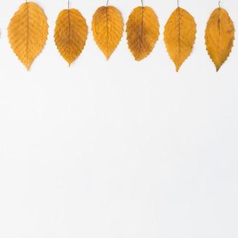 Fila de hojas amarillas