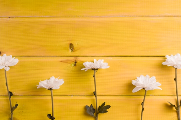 Fila de flores blancas sobre fondo amarillo de madera