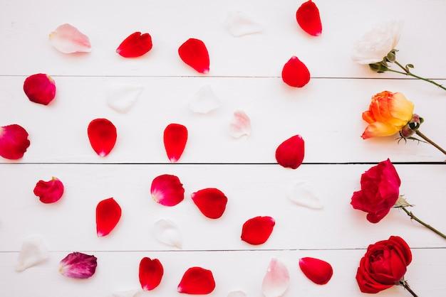 Fila de flores cerca de pétalos rojos