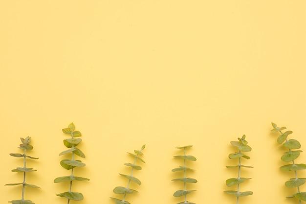 Fila de hojas de eucalipto ramita sobre superficie amarilla