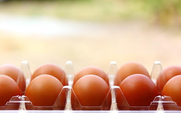 Fila de huevos con desenfoque
