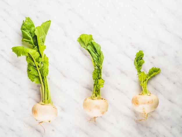 Fila de verduras de nabo sobre fondo de mármol