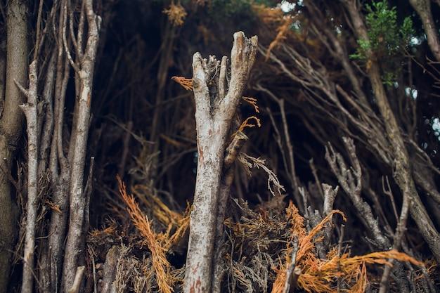 Filas de árboles frutales en la primavera. sin embargo, sin hojas.
