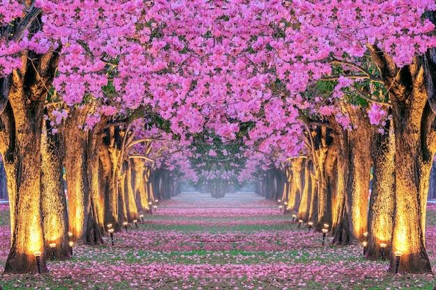 Filas de árboles de hermosas flores rosadas.