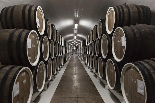 Filas de grandes barricas de roble en sótano oscuro. planta para la producción de vino.