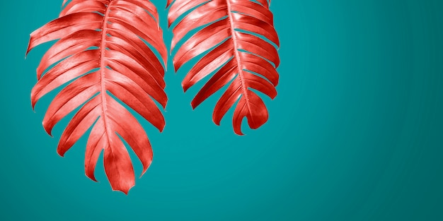 El filodendro de coral vivo se va en verano mínimo del fondo azul
