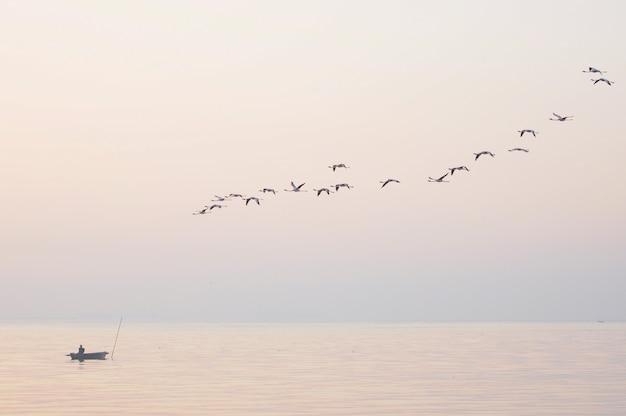 Flamencos en vuelo aves en el cielo