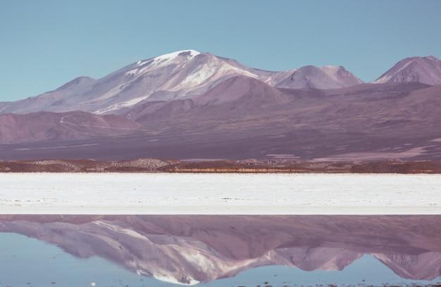 Flamingo en el lago del altiplano boliviano vida silvestre naturaleza desierto