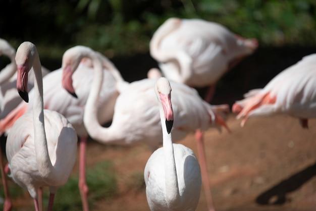 Flamingo en el zoológico, tailandia