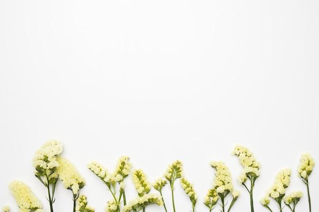Flat lay de flores silvestres con copyspace