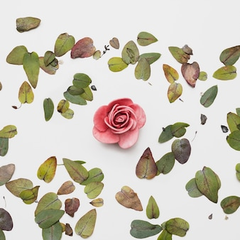 Flat lay de hermosas flores