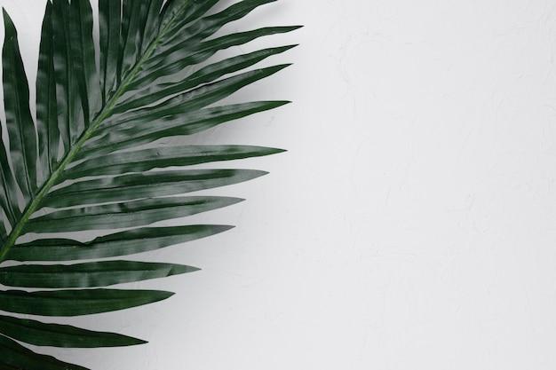 Flat lay de hoja tropical con copyspace