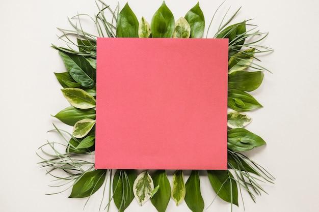 Flat lay de papel cuadrado en hojas