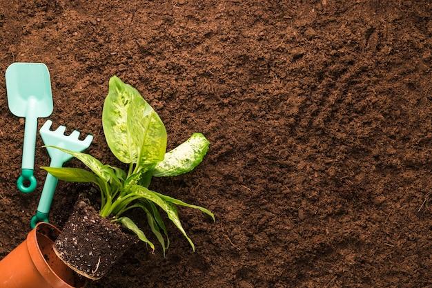 Flat lay de planta y herramientas de jardinería con copyspace
